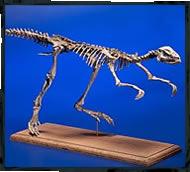 small dinosaur photography