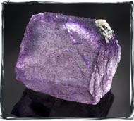purple flourite photography