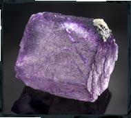 purple flourite photography